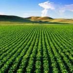 کمک های مالی دولت یازدهم به کشاورزی هرمزگان درتاریخ بی سابقه است
