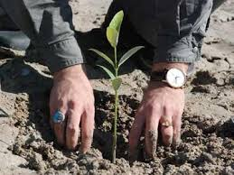 چهار هکتار از کمربند سبز درختکاری شد / هزار و ۶۰۰ اصله نهال کاشته شد