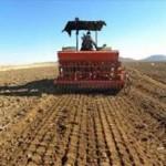 ۷۰ درصد کشت مکانیزه گندم هرمزگان در حاجی آباد انجام می شود