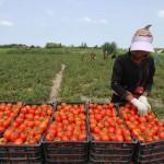 ۱۳۹میلیارد ریال تسهیلات به متقاضیان بخش کشاورزی هرمزگان پرداخت شد
