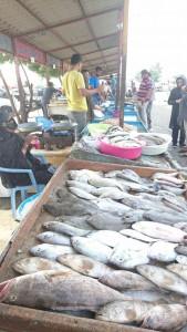 بازار ماهی فروشان بندرعباس دریک نگاه