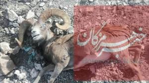 مرگ مشکوک حیات وحش در شرق هرمزگان